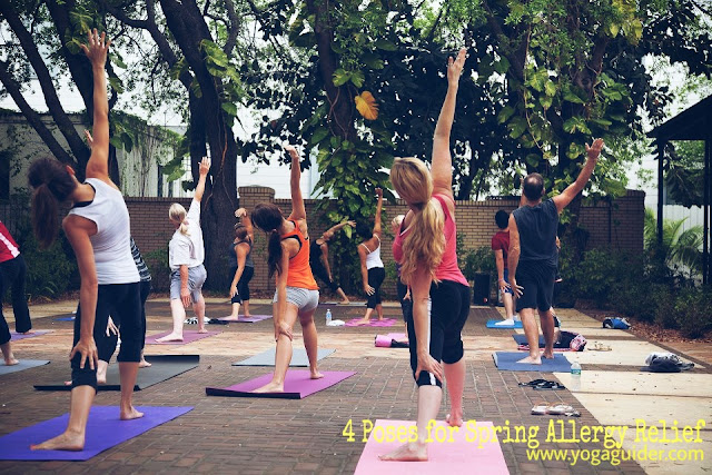 Outdoor Yoga - 4 Yoga Poses for Spring Allergy Relief