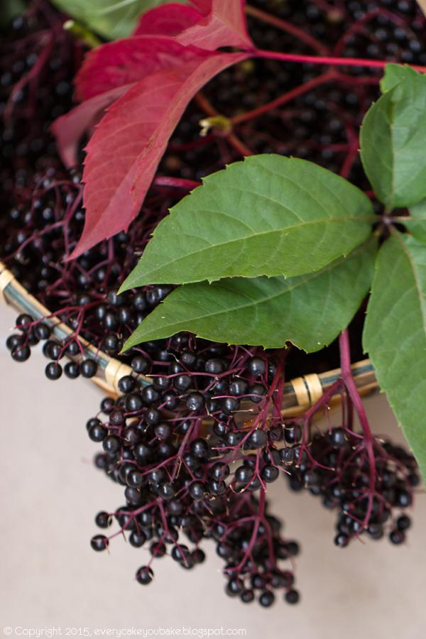 pyszna i zdrowa galaretka z owoców czarnego bzu