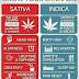 Varieties of Cannabis