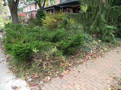 Toronto The Annex Front Garden Fall Clean up before by Paul Jung Gardening Services