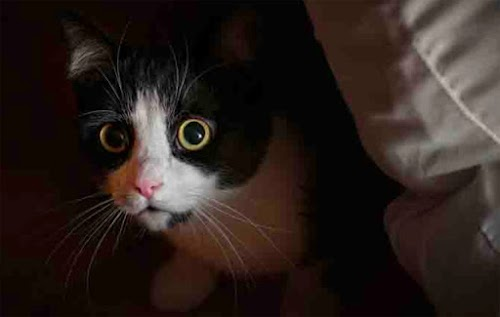 Separation Anxiety in Cats and How to Cope with It