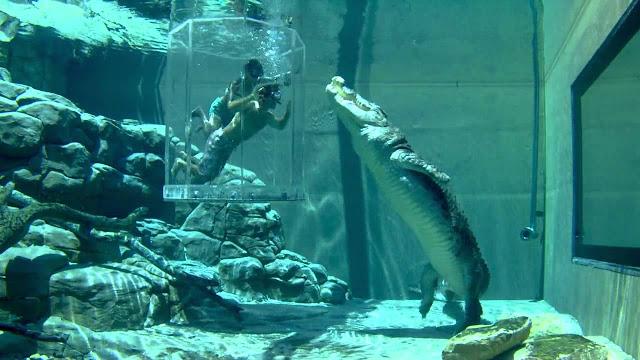 Crocosaurus Cove -Australia