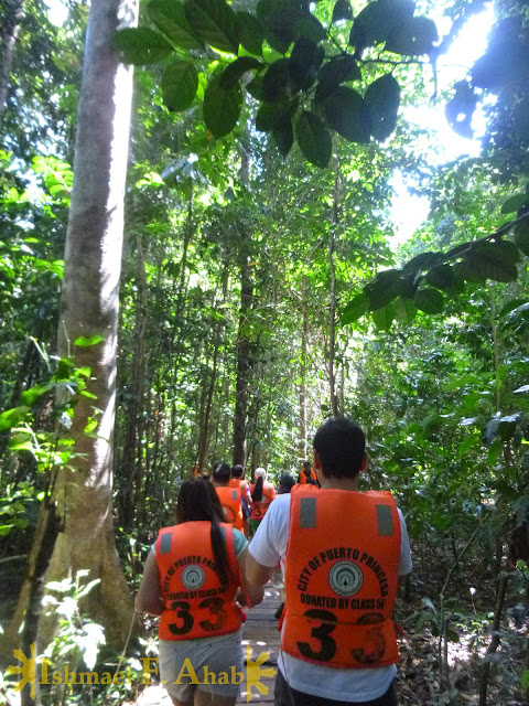 Forest trail to Puerto Princesa Underground River