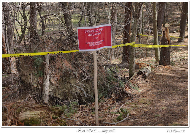 Fresh Pond: ... stay well...