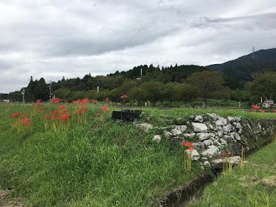 決戦地付近から見る笹尾山