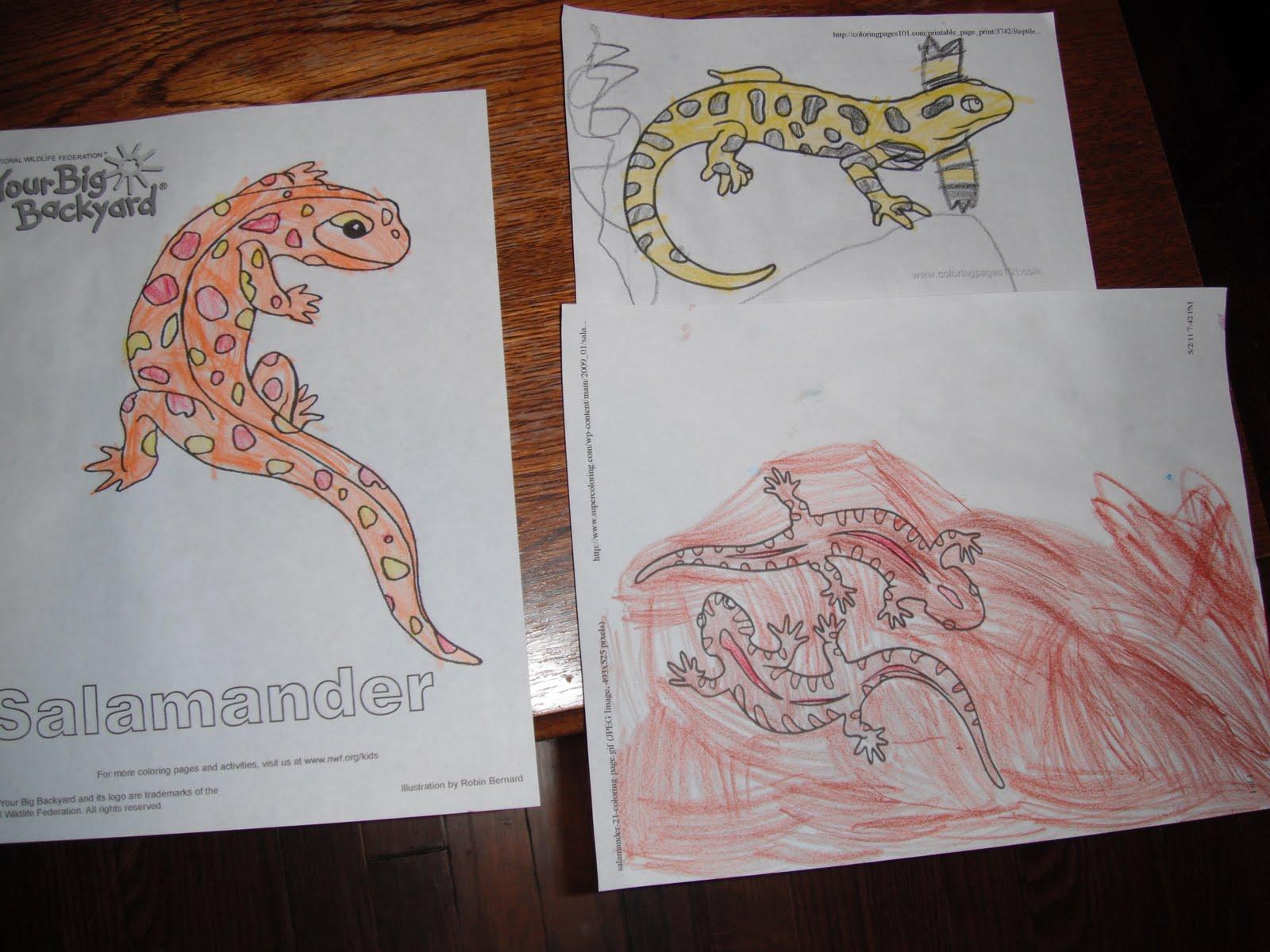 Bookworm Fun Salamanders And Ne