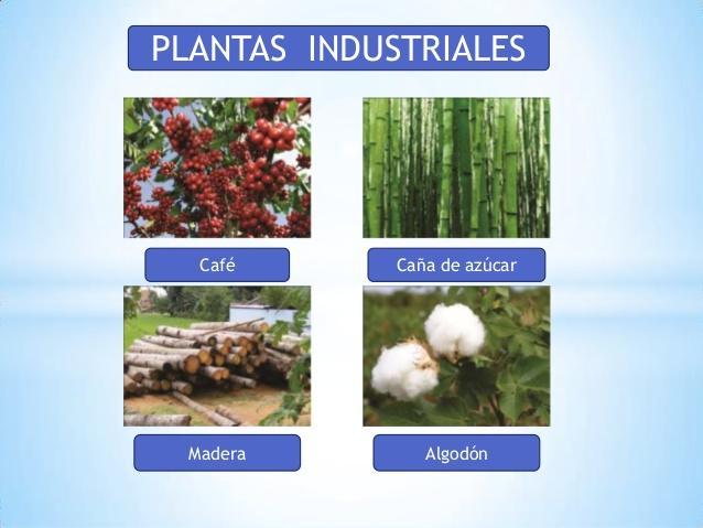 Aprendamos sobre las plantas con las tic uso de las plantas for Que son plantas ornamentales