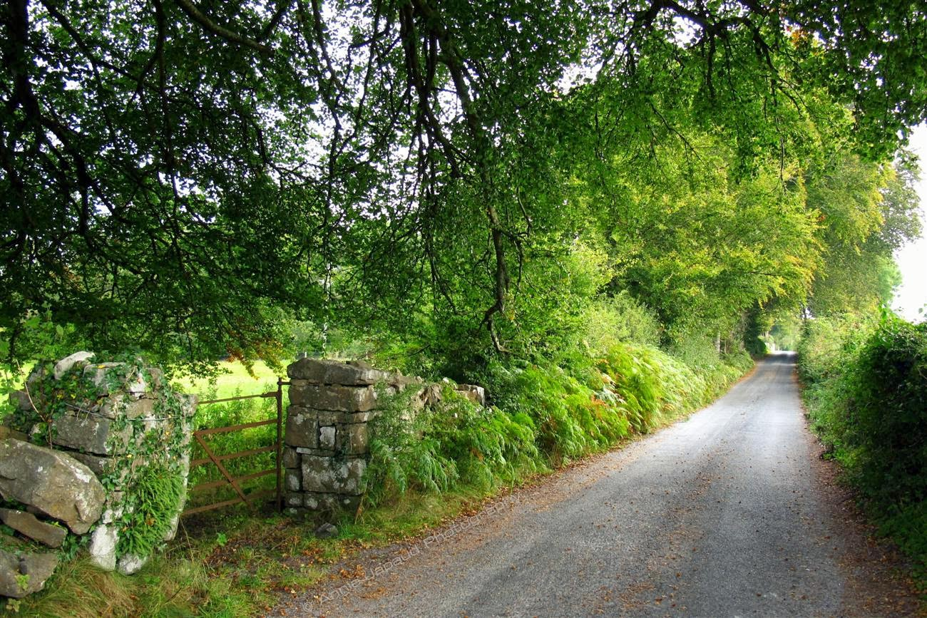 country road, green trees