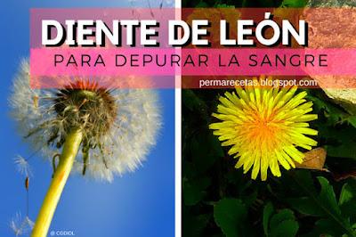 propiedades medicinales del Diente de León