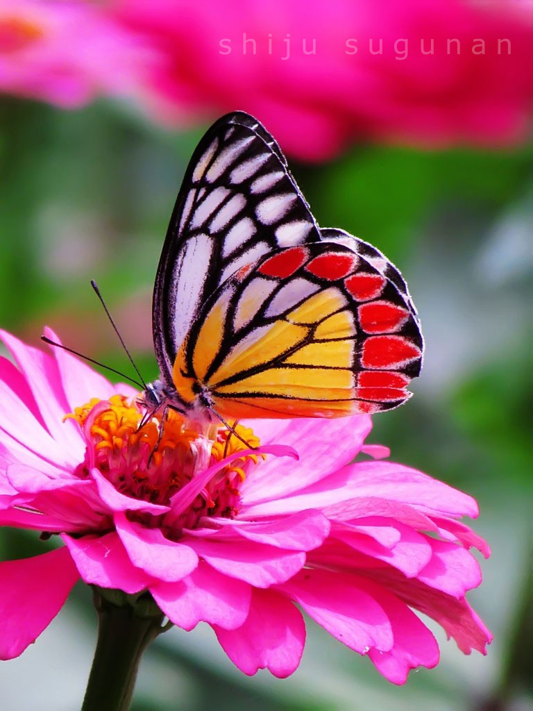 Butterfly Bright Coloration 53