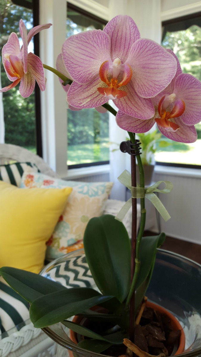 How To Grow Healthy Happy Orchids In Your Home Just One Donna