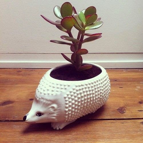 Ceramic Planter Pot: A Creative Mix Of Naturalizing And Uniqueness