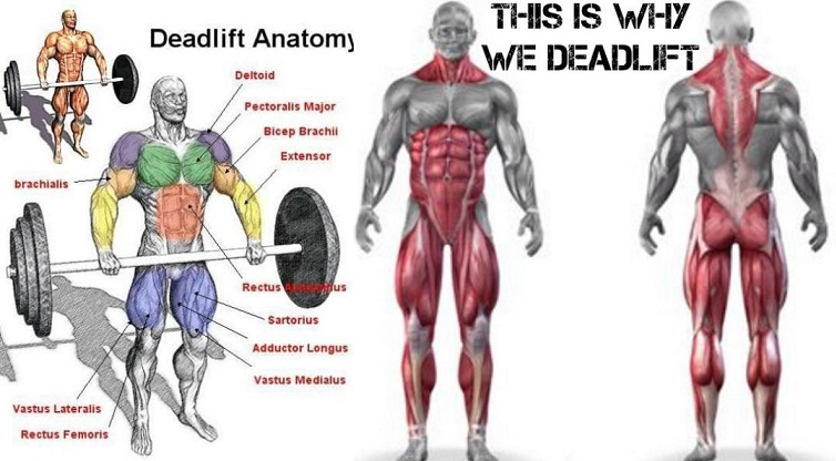 df0841118bd2 20 Benefits of Deadlifts You Probably Never Knew
