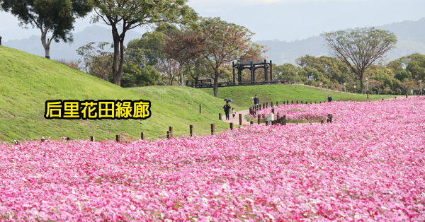 台中后里景點|后里花田綠廊|環保公園|1.2公頃繽紛花海|棒棒糖花海