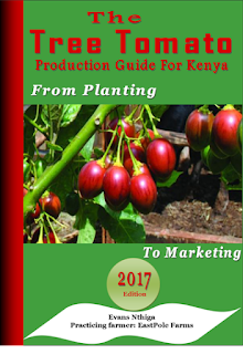 tree tomato farming guide