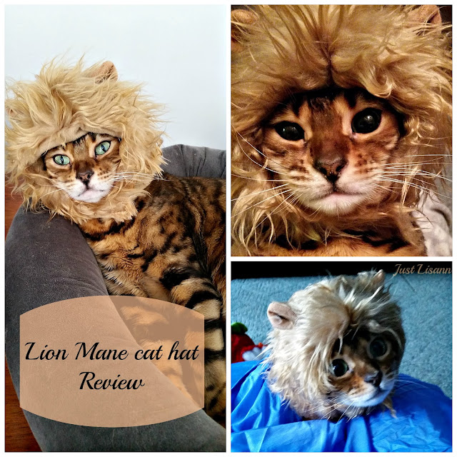 Lion Mane Cat Hat Review