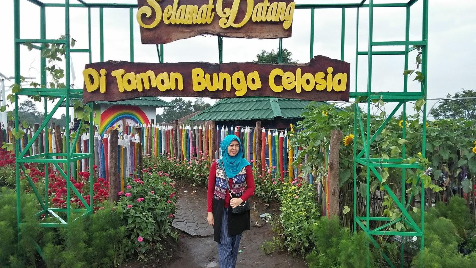 Taman Bunga Celosia Bandungan Rasa Luar Negeri Warna Warni