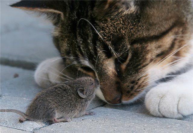 Tips Mudah dan Ampuh Cara Mengusir Tikus di Rumah