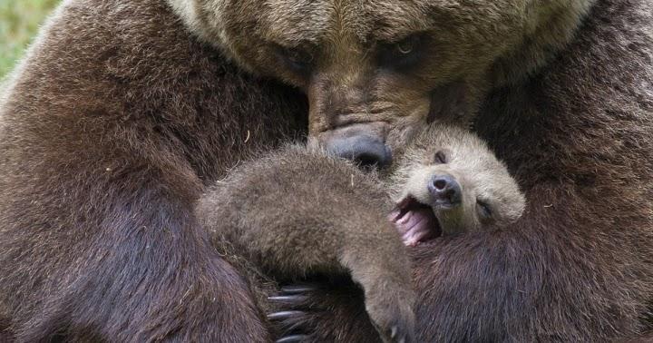 wolf kissing its cub - photo #31