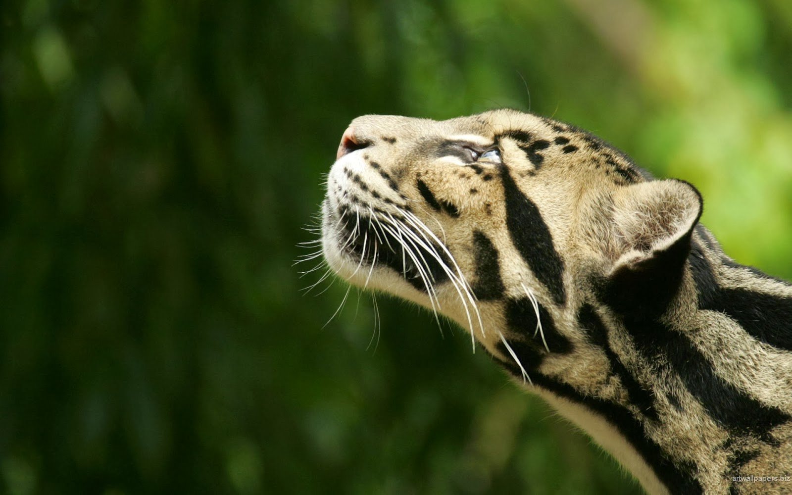Hd Animal Wallpapers Wild Life Wild Animals High: Animals HD Funny Wallpapers