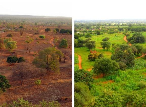 Savana, Prima e Dopo le Piogge