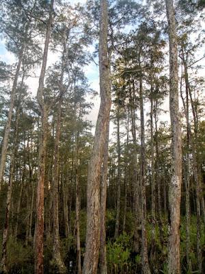 Detalle de los troncos en el bosque