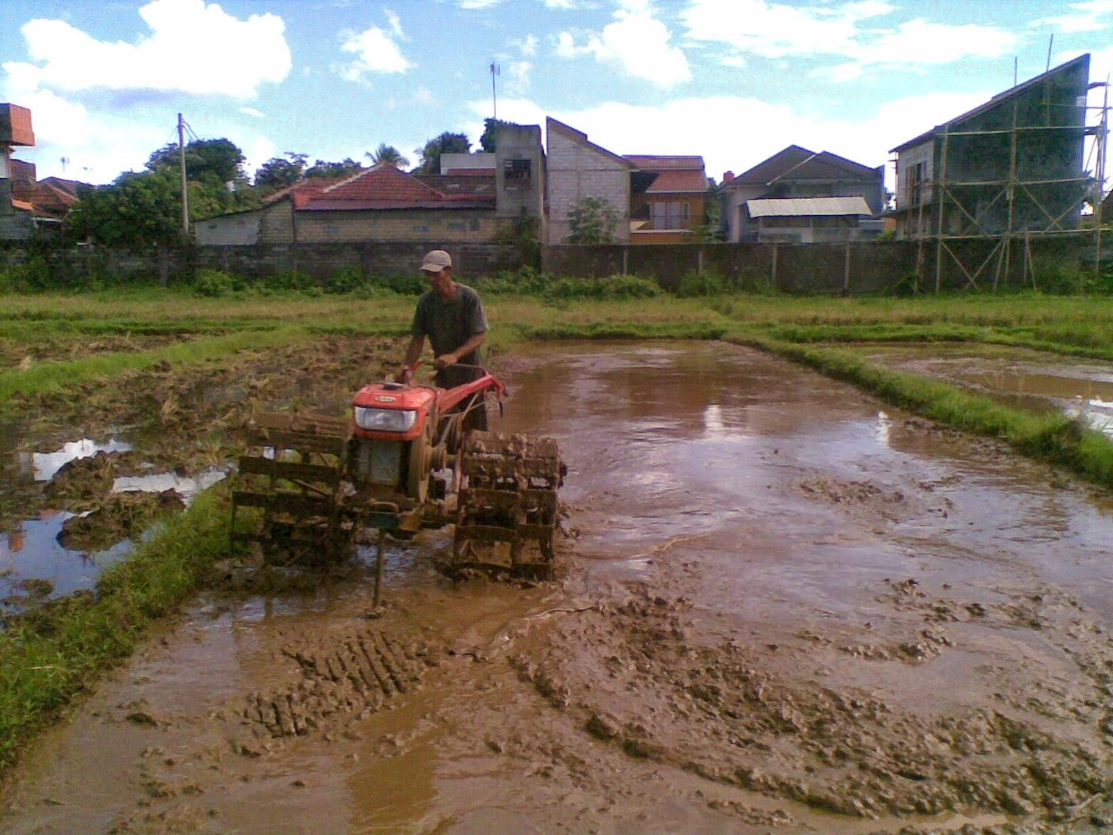 Pengolahan lahan, traktor roda dua, sawah