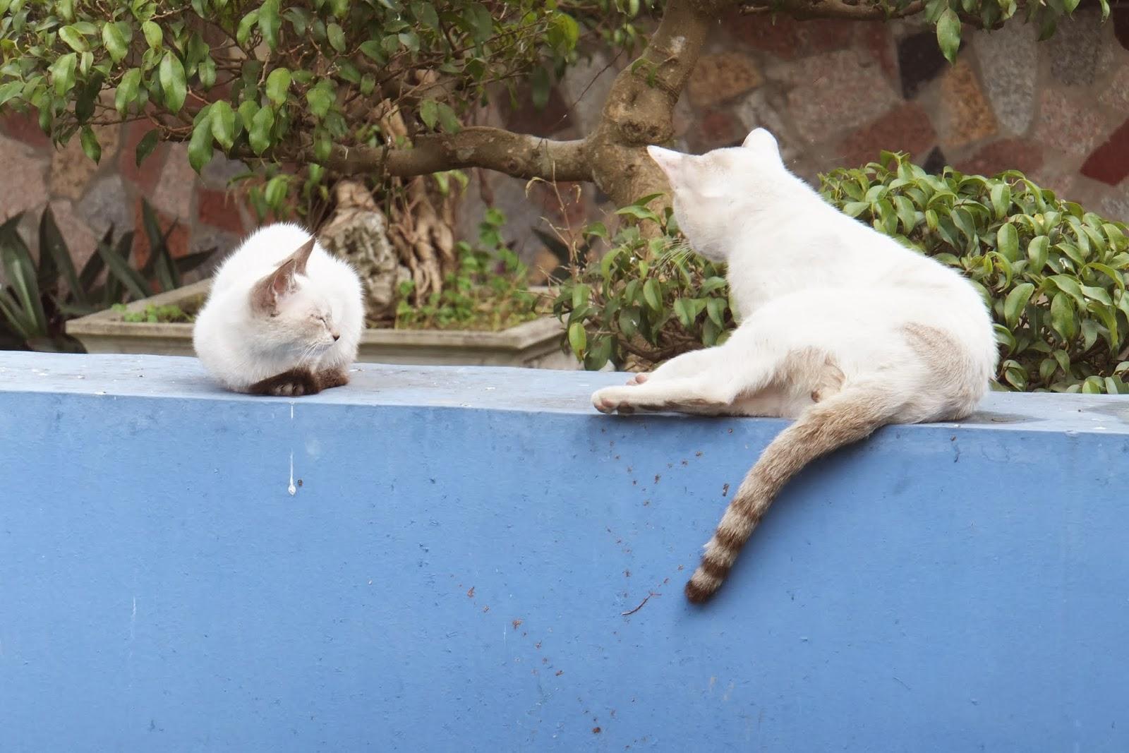 Kach san Thang loi hotel タンロイホテルの猫