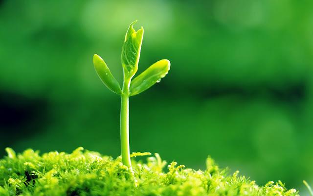 Pengertian Jaringan Parenkim Pada Tumbuhan, Ciri, Fungsi dan JenisnyaPengertian Jaringan Parenkim Pada Tumbuhan, Ciri, Fungsi dan Jenisnya