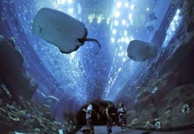 Imagen de tunel acuario gigante