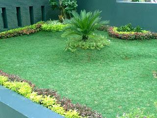 Rumput Hias Tumbuh Tidak Rata ? Lakukan Langkah-langkah ini !