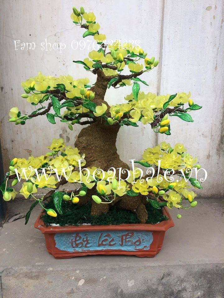Goc bonsai mai dao o Dan Phuong
