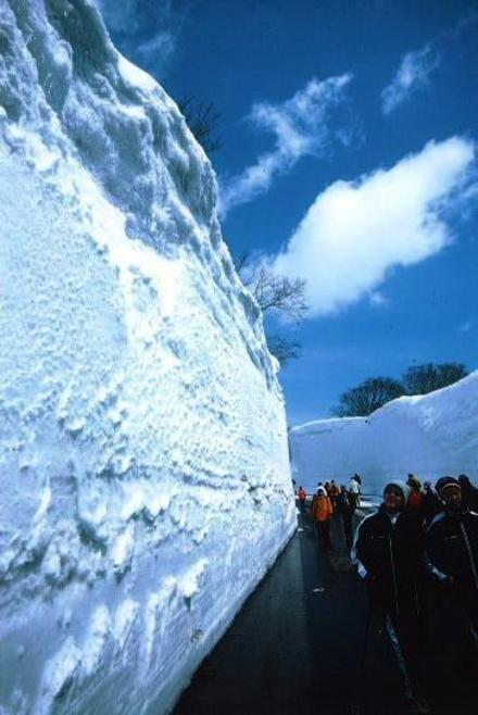 Hakkouda Walk (walk along the snow wall), on Goldline Root 103, Aomori Pref.