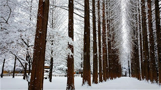 Musim Dingin Korea