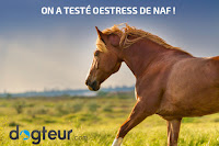 On a testé Oestress de NAF !