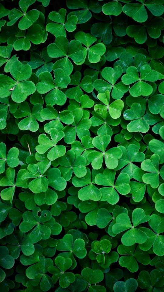 Lucky Clover  Galaxy Note HD Wallpaper