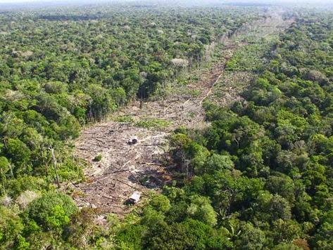 Desmatamento Acelerado