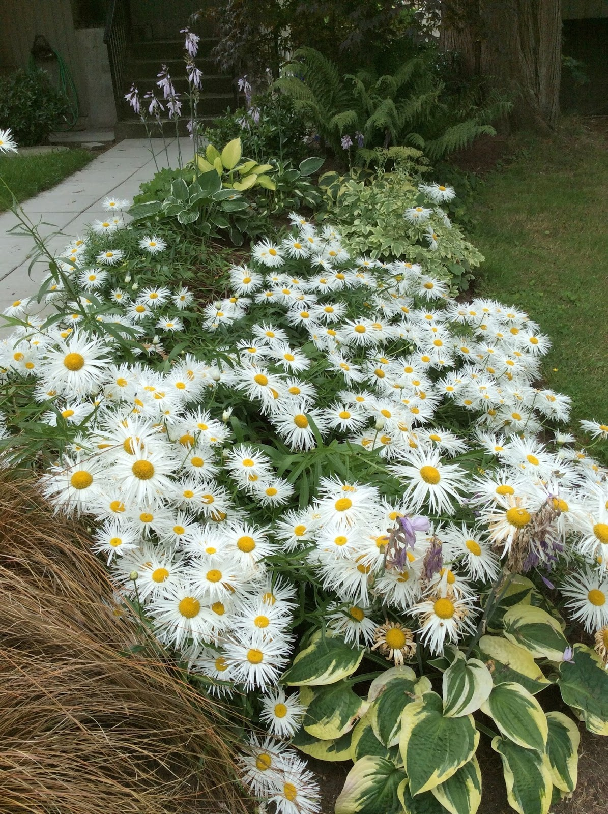 Views From Mount Dunbar Summer Flowers