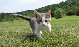 Bolehkah Kucing Diberi Makan Nasi? Ini Rincian Jawabnya!