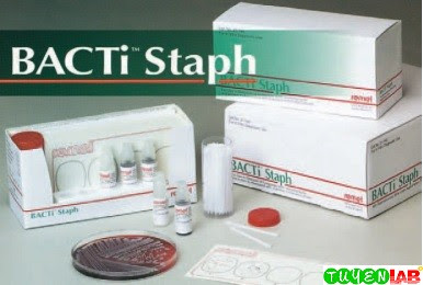 Slide coagulase test (BactiStaph), a latex agglutination method commercially available for the detection of both clumping factor and protein A.