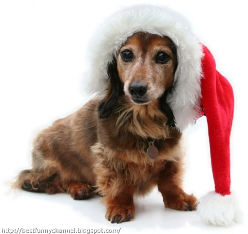 Very nice Christmas  dog.