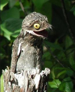 الطائر الغريب الذي بث الرعب في ولاية ورقلة