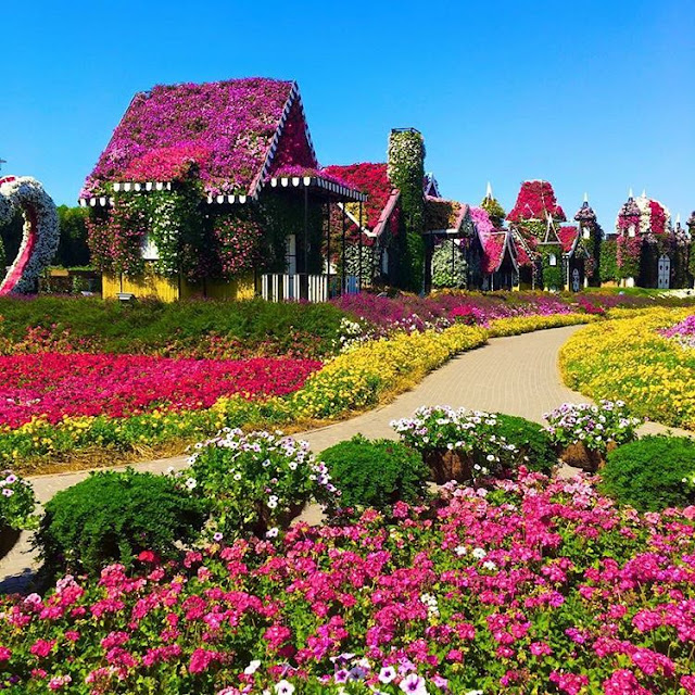 Awesome Miracle Garden Dubai,things to do in dubai,dubai attractions map video coupons tickets 2016 packages and prices for families in summer,dubai destinations to visit and landmarks map airport,dubai airport destinations map,dubai honeymoon destinations,cobone dubai destinations,dubai holiday destinations,things to do in dubai airport for a day at night with kids 2016 layover in summer during ramadan with family