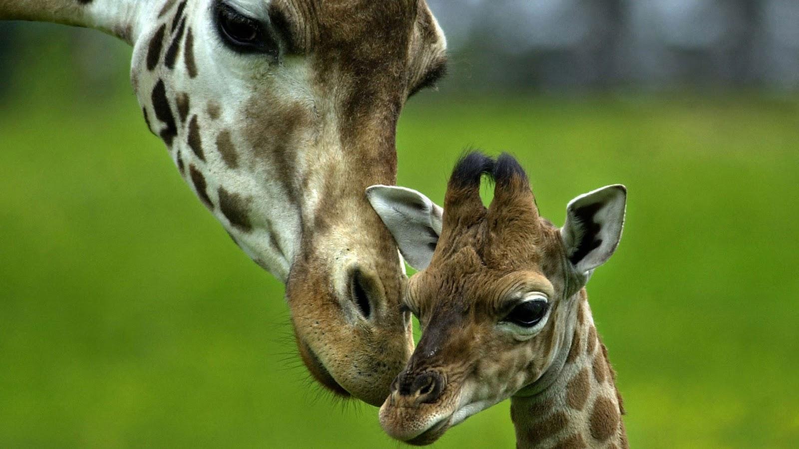 Imágenes De Animales En Hd Para Fondo De Pantalla: Imagenes Hilandy: Fondo De Pantalla Animales Madre Y Cria