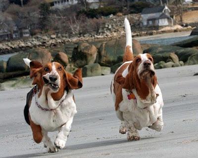 chiens drôles