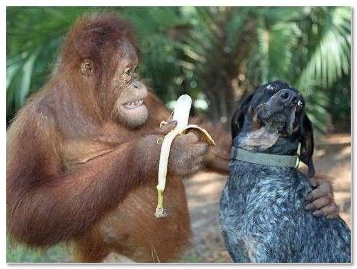 Immagini Divertenti Immagine Divertente Di Una Scimmia E Di Un Cane