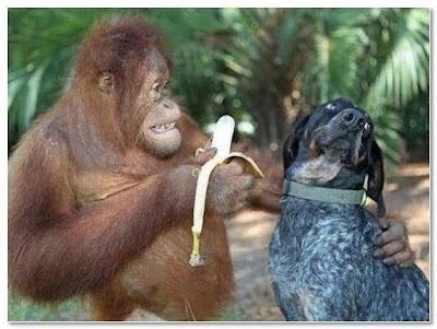 immagine divertente di una scimmia e di un cane