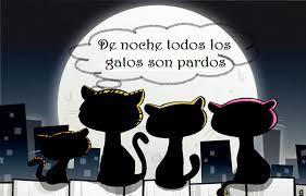 Gatos negros por la noche