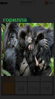 Большая горилла с детенышем сидит и держит его на руках