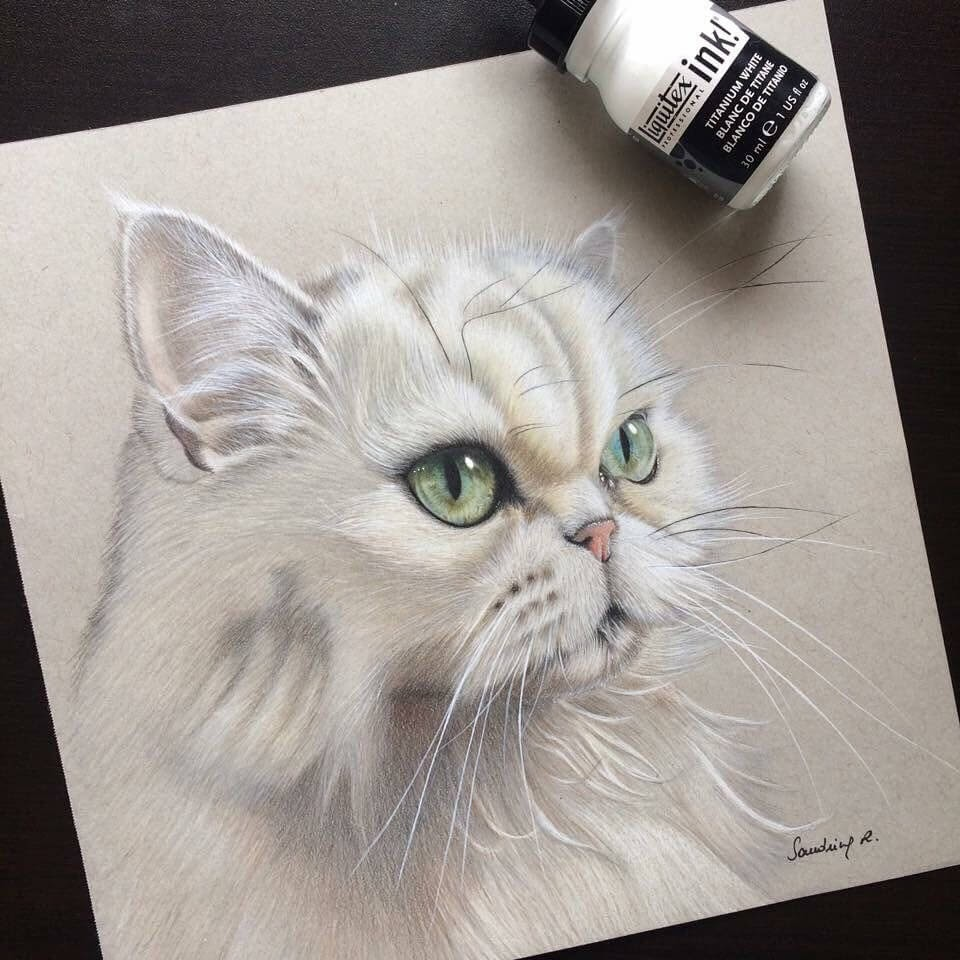 01-Agathe-white-cat-Sandrine-R-Sweet-Realistic-Animal-Portrait-Drawings-www-designstack-co